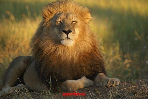 """О том, как разбойник кормил салом льва (из сказки Т. Эгнера """"Люди и разбойники из Кардамона"""")"""