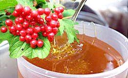 Смесь сока калины и мёда для лечения злокачественных опухолей