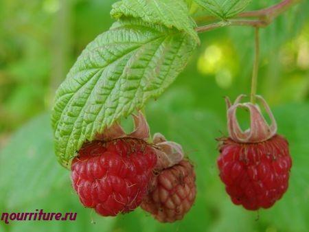 Спиртовая настойка из листьев малины (от укусов насекомых)