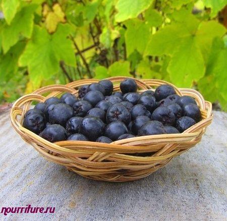 Черноплодная рябина при недостатке витамина P
