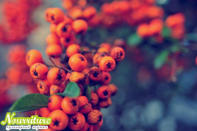 Ветви рябины красной: свойства веток рябины красной