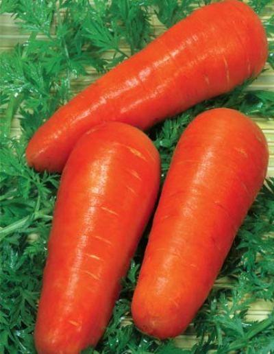 """Морковь сорта """"красавка"""" (украинская селекция)"""