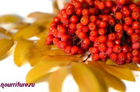 Сок из плодов рябины для лечения геморроя и запоров