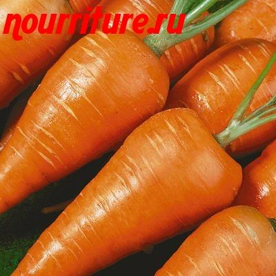 "Морковь сорта ""мо"""