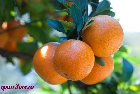 Суп из апельсинов