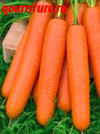"Морковь сорта ""карамелька"""