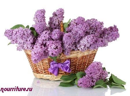 Чай из цветков сирени, листьев чёрной смородины и ясеня