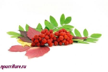 Варенье из ягод рябины