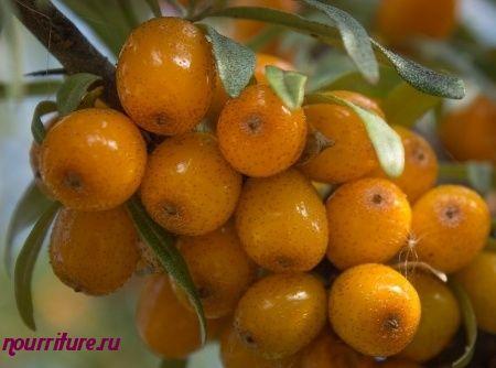 Масло из свежих ягод облепихи