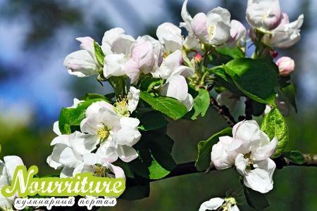 О свойствах завязей яблоневых плодов