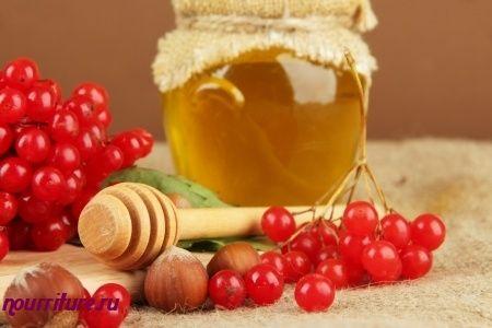 Отвар свежих плодов калины с мёдом при хроническом кашле