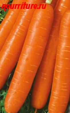 """Морковь сорта """"любимая"""""""