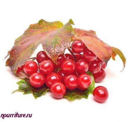 Напиток из свежих ягод калины при простуде