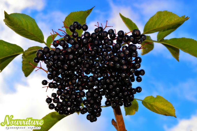 Сок черноплодной рябины или плоды при гипертонии