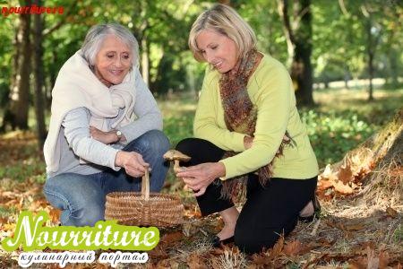 Конкретные советы: как правильно собирать грибы?