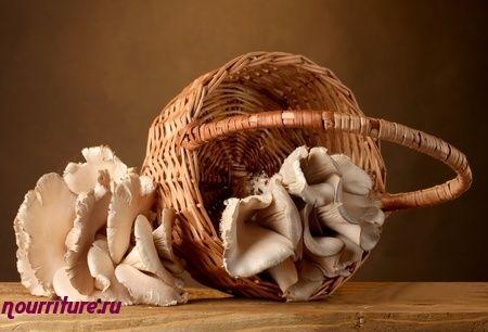Грибы в медицине и грибы в кулинарии