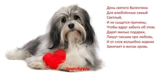 Сюрпризы на День святого Валентина