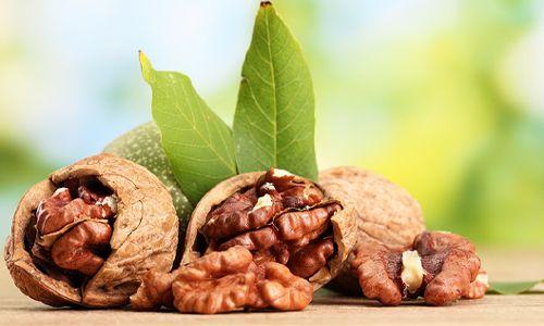 Грецкий орех (семя, или ядро): полезные свойства грецкого ореха