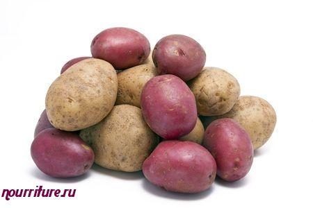 """Картофель сорта """"амороза"""" (голландская селекция)"""