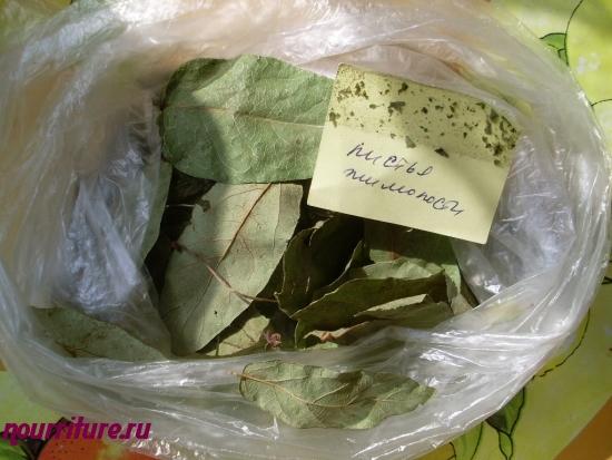 Настой листьев жимолости при болях в ЖКТ и поносе