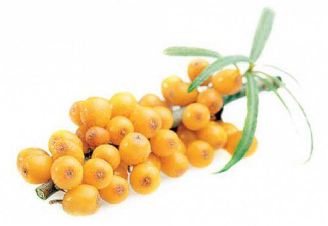 Сок из плодов облепихи: полезные свойства облепихового сока