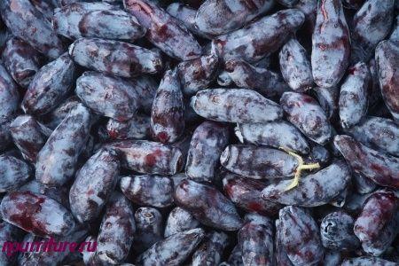 Сушёные ягоды жимолости съедобной