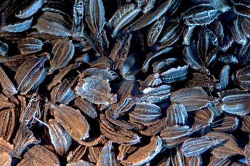 Настой морковных семян при мочекислом диатезе и почечнокаменной болезни
