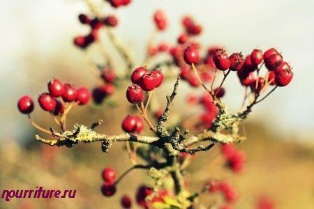 Настойка из сушёных плодов боярышника