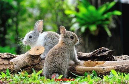 Легенда о пасхальном зайце