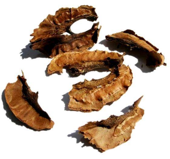 От мастопатии с перегородками от грецких орехов
