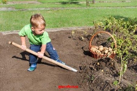 Перекличка в огороде (стишок)
