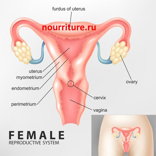 Female-reproductive-system1.jpg