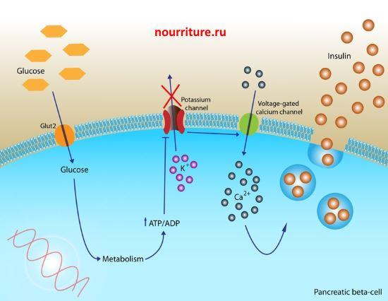 saharniy-diabet-1-tipa-narodnie-sredstva-lecheniya