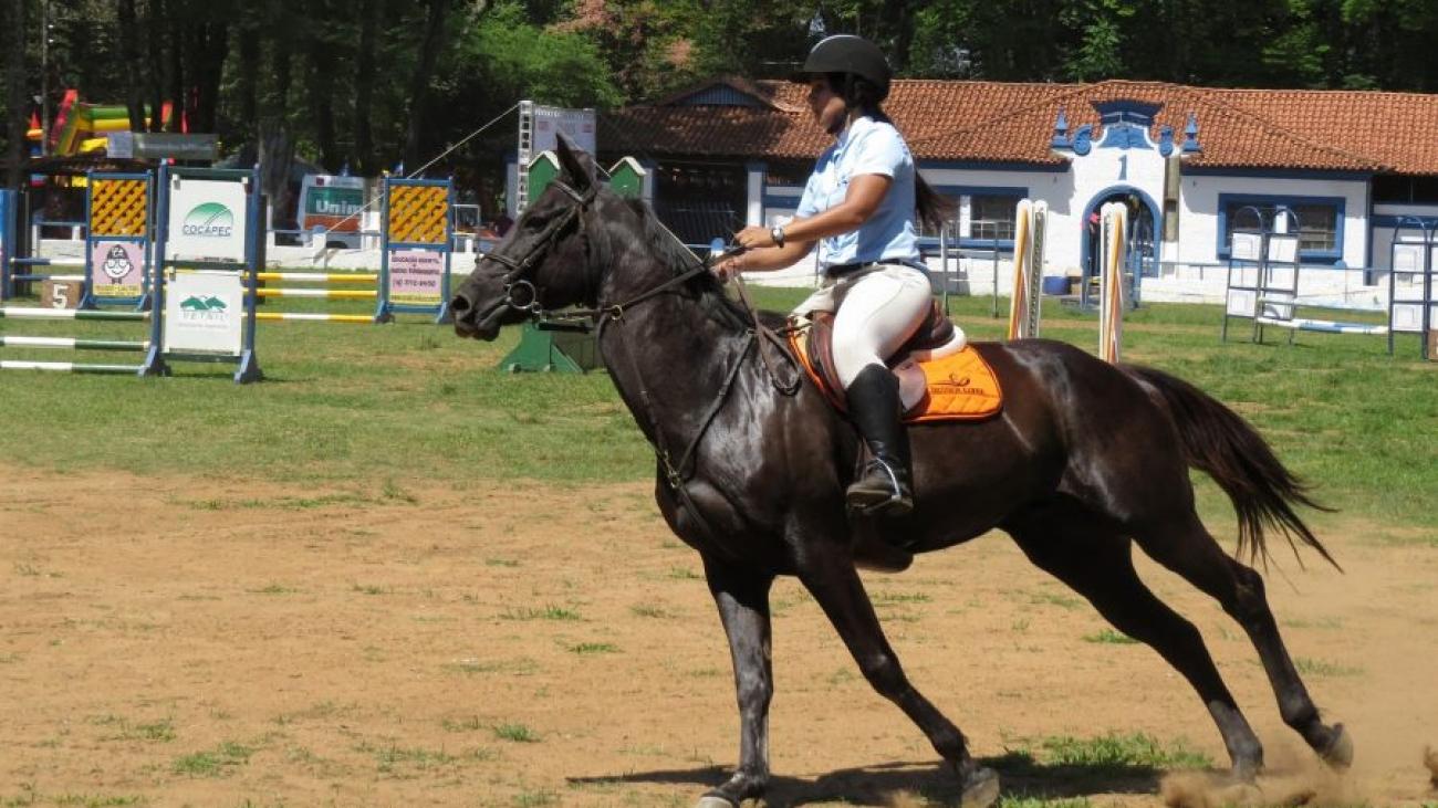 Сонник верховая езда