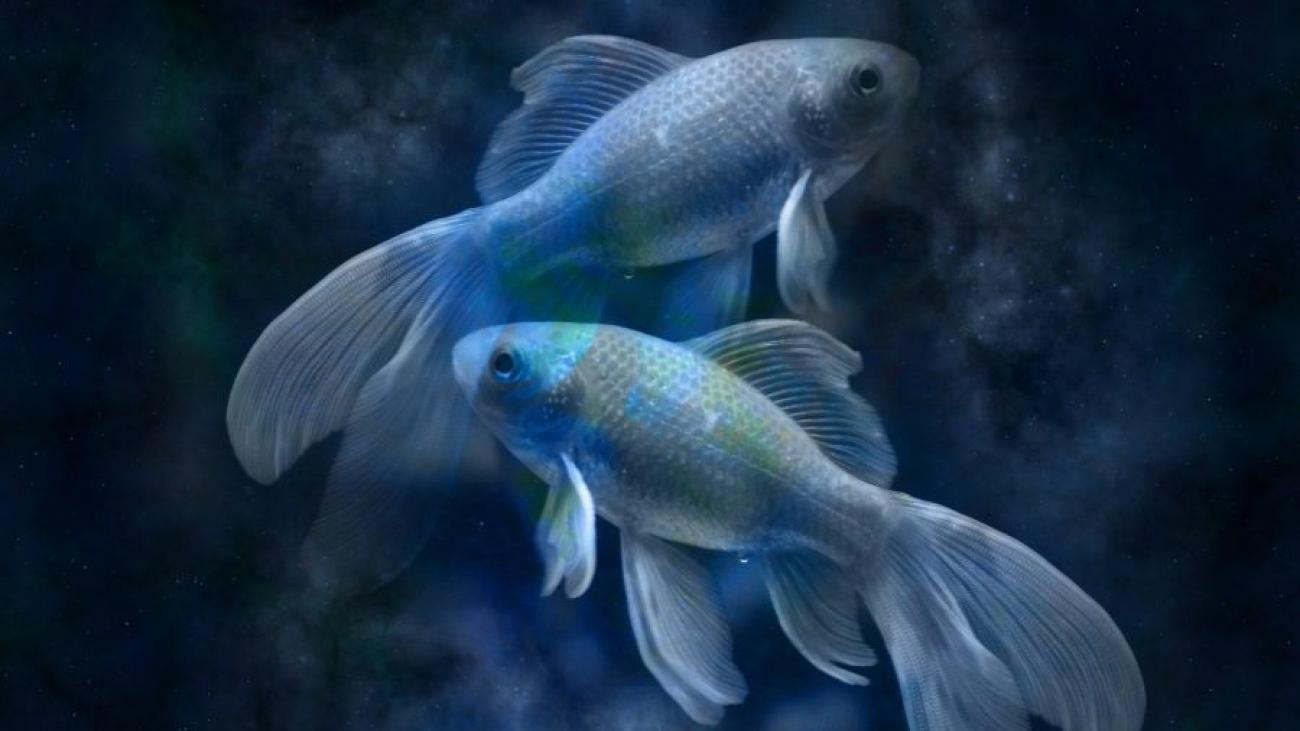Гороскоп на 2022 год для Рыб